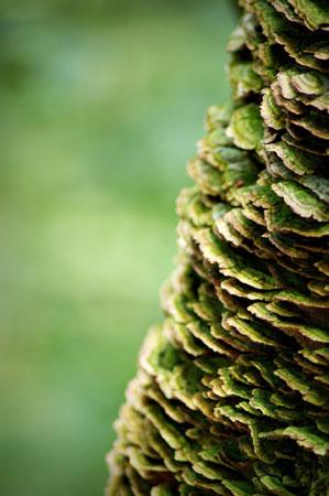 TreeFungi