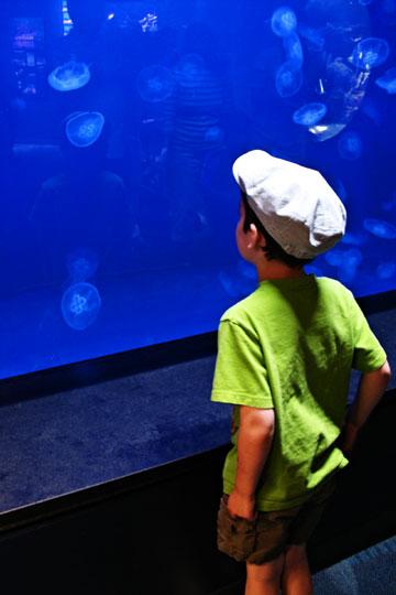 Nikjellyfish